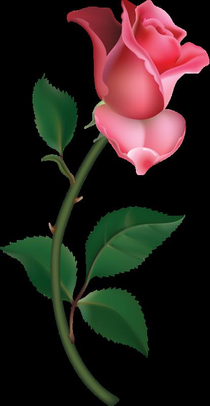 414x800 Single Pink Rose Vintage Clip Art Image