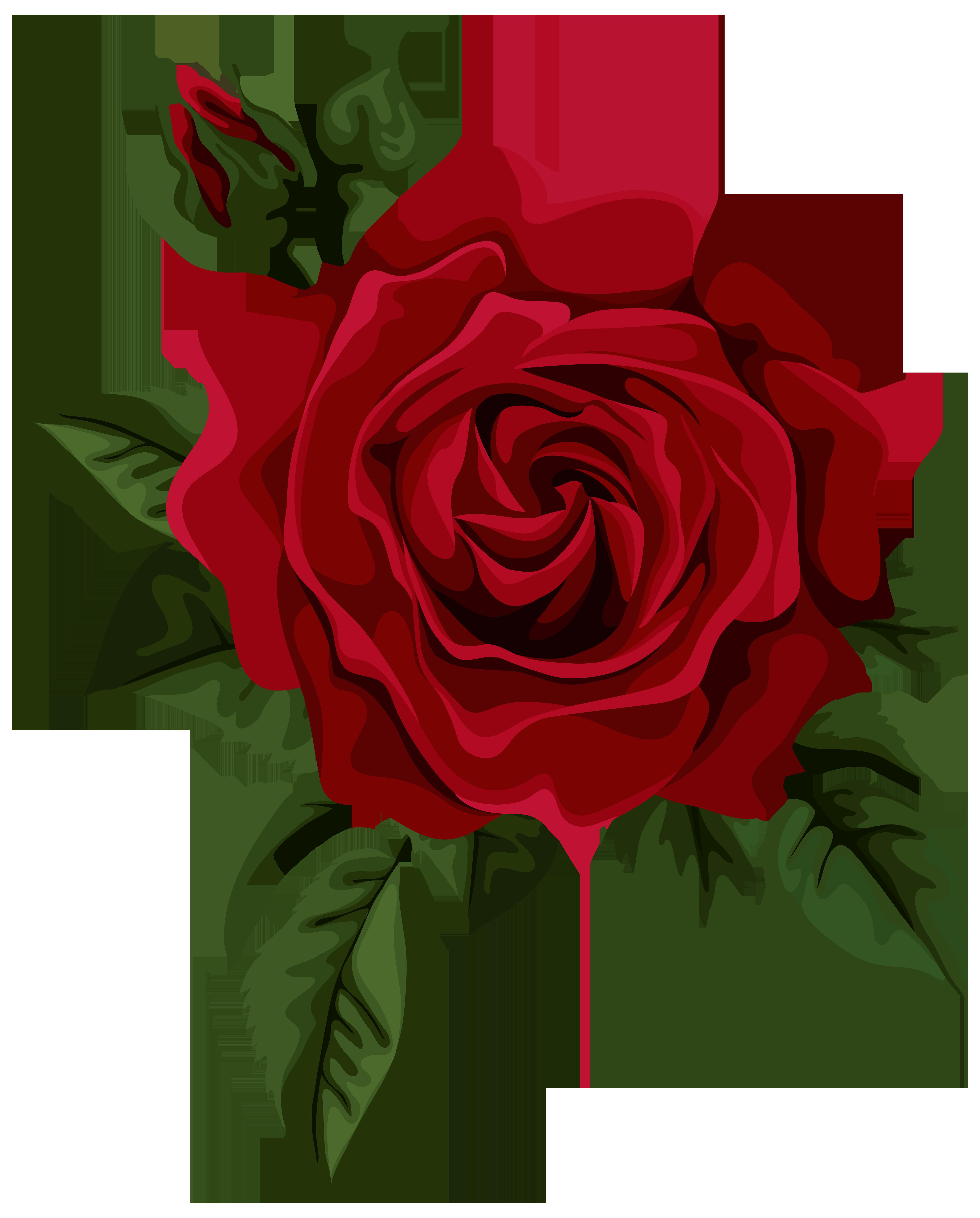 5632x7000 Top 84 Red Rose Clip Art