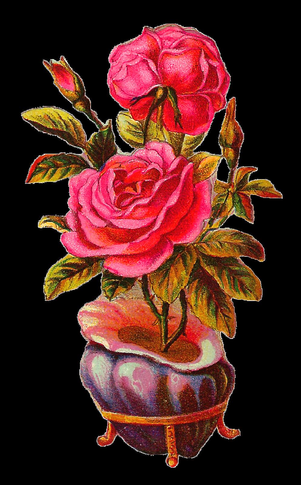 993x1600 Antique Images Botanical Vintage Download Pink Rose With Shell