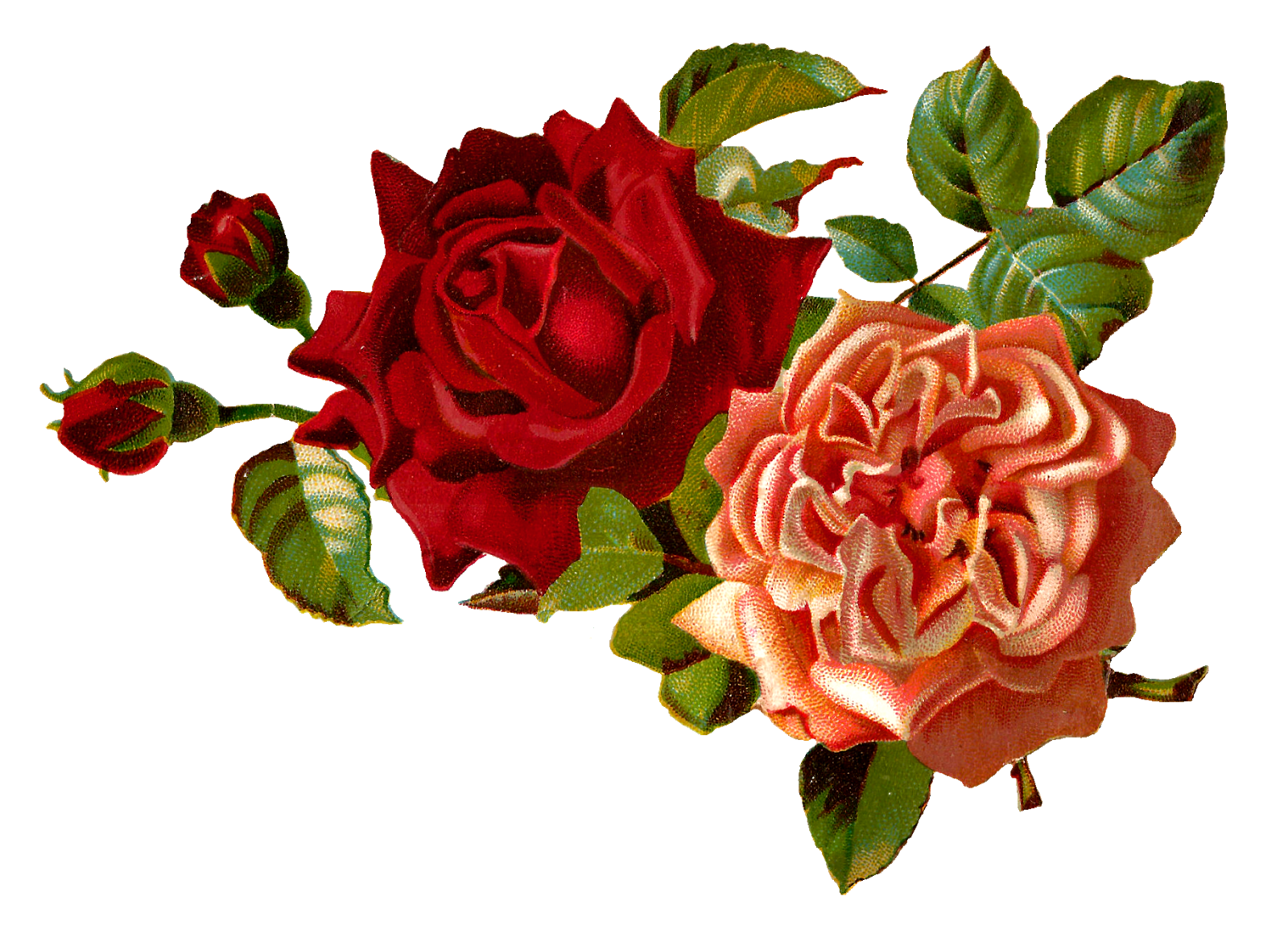 Vintage Roses Images Clipart | Free download on ClipArtMag