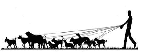 465x173 Clipart Walk The Dog