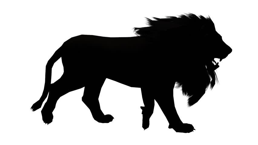 852x480 Lion Walk,endangered Wild Animal Wildlife Walking. Cg 02533 Stock