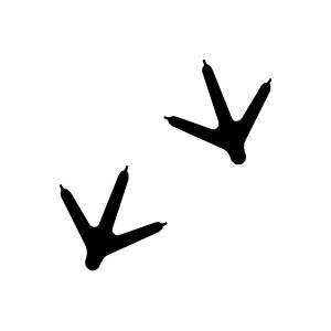 300x300 Footprint Clipart Bird