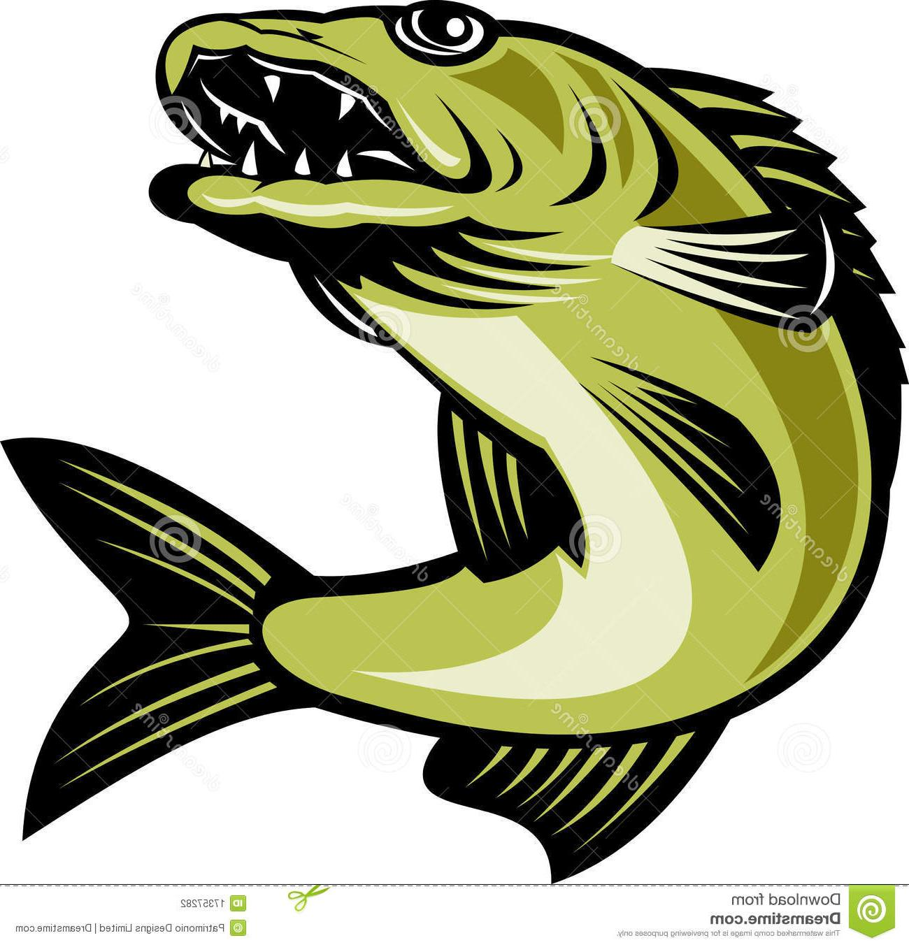 1300x1355 Best Walleye Fish Jumping Images