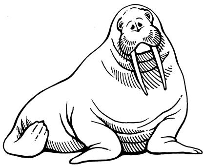 420x342 23 Best Walrus Images Drawings, Dressers And Gears