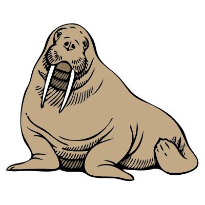 400x400 Walrus Clip Art Walrus Clipart Fans