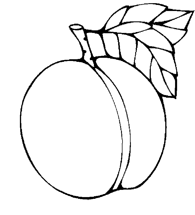 675x744 Apricot clipart black and white