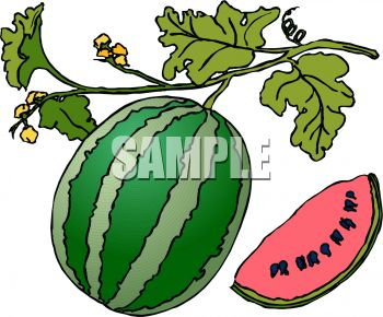 350x290 Watermelon Plant Clipart Black And White