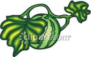 300x188 Watermelon Vine Clipart