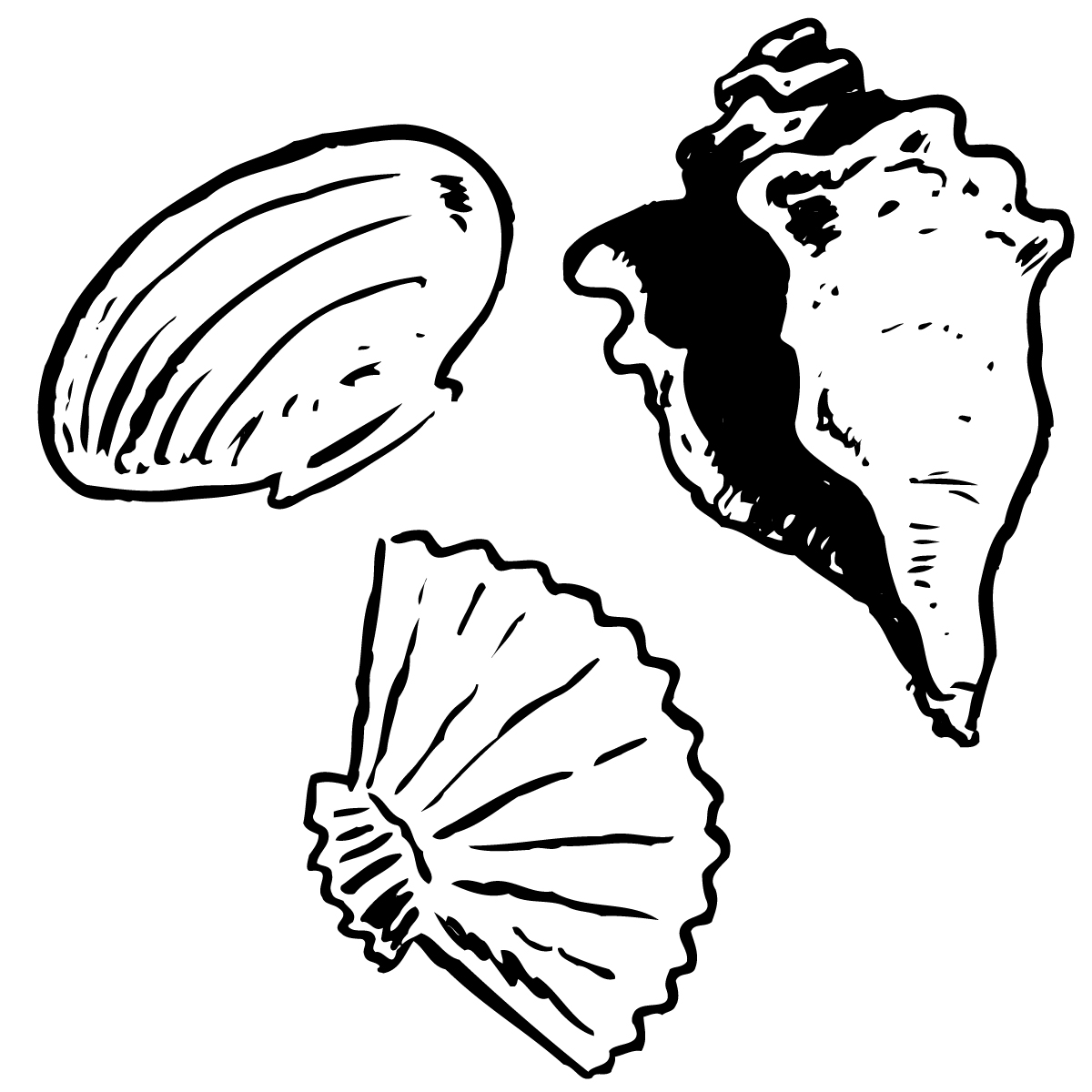 1200x1200 Shell Clipart Black And White