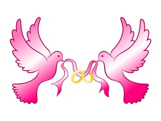 320x240 Color Dove Clipart, Explore Pictures