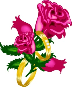 248x300 Free Rose Pictures