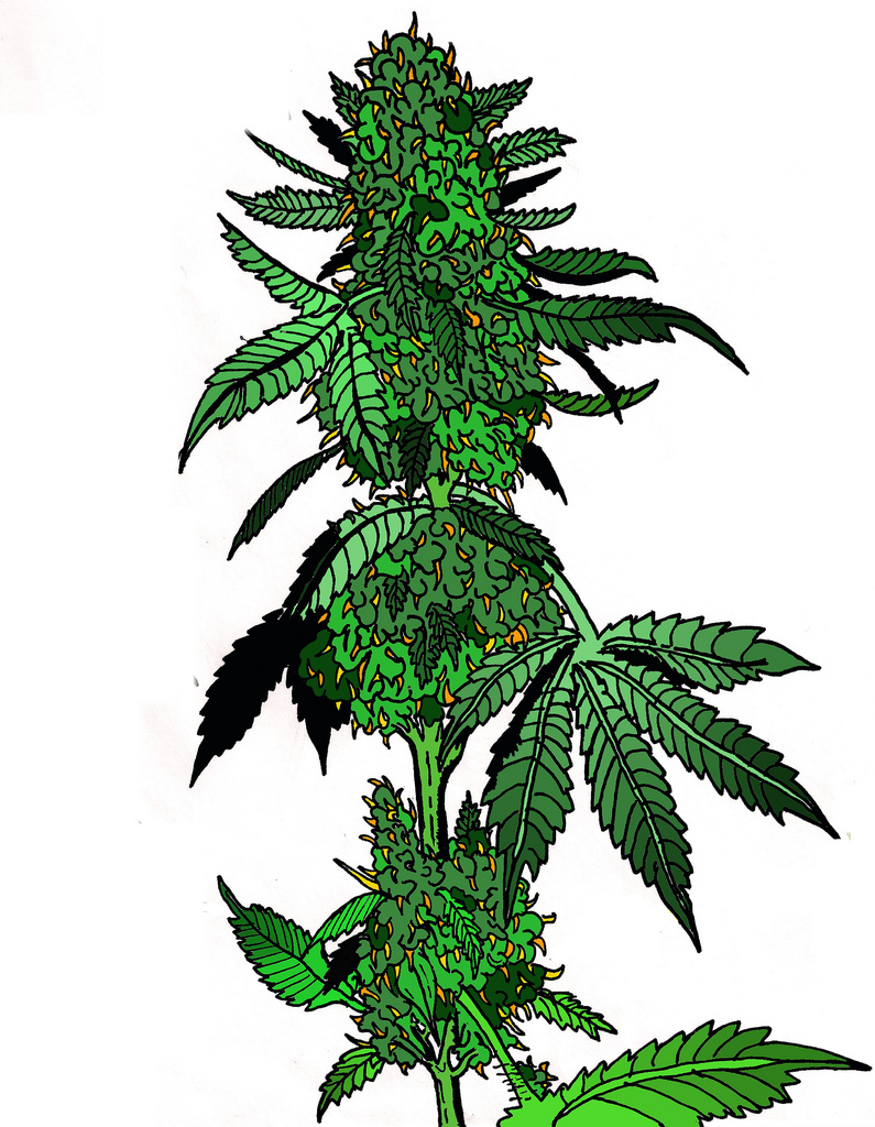 Marijuana Leaf 3 Medicine Cannabis Pot Weed Smoking Smoke |Weed Plant Drawings
