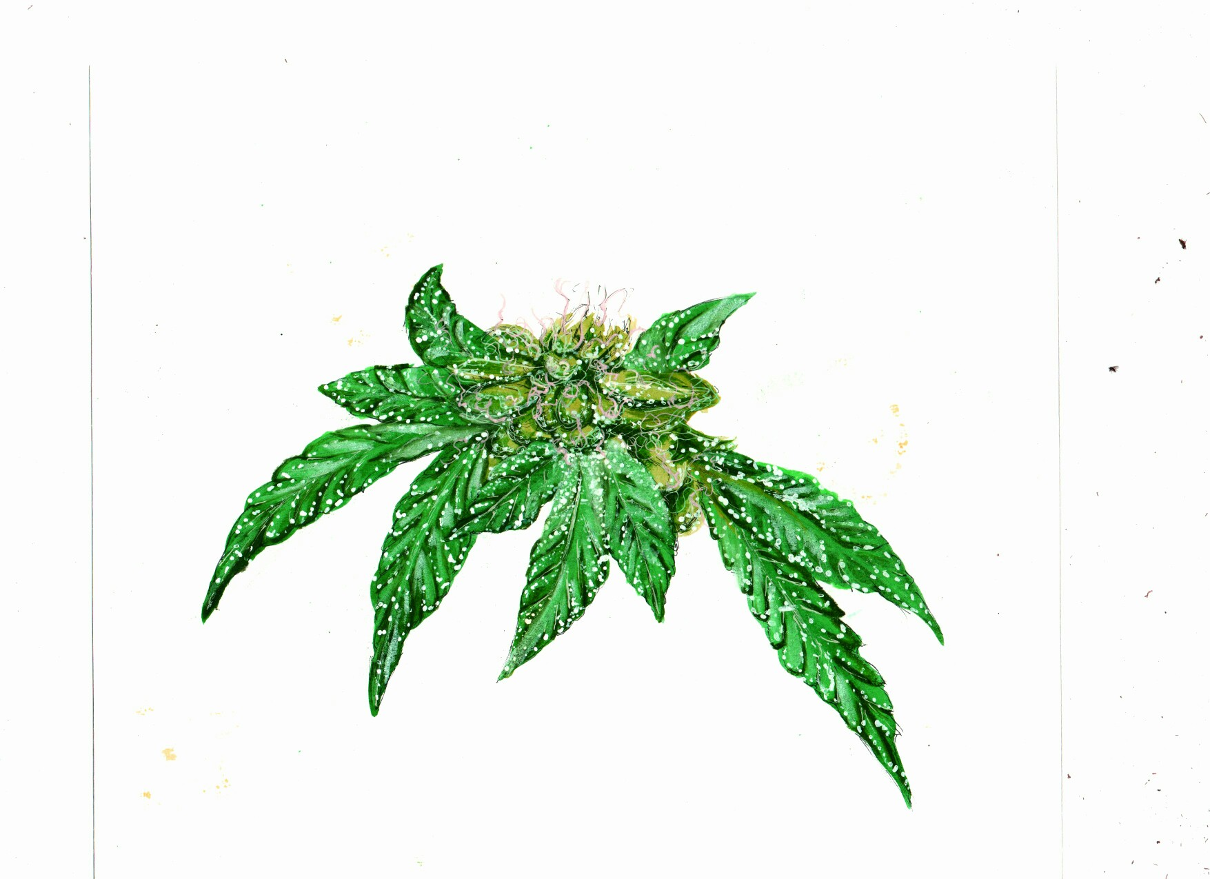 Marijuana Pot Weed Leaf Symbol Stock Illustration ... |Weed Plant Drawings