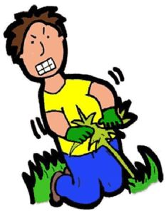 236x313 Tips And Tricks On How To Get Rid Of Weeds. Real Estate Now