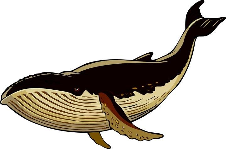 720x475 Top 75 Whale Clip Art