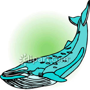 300x300 Blue Whale with Barnacles Royalty Free Clipart Picture