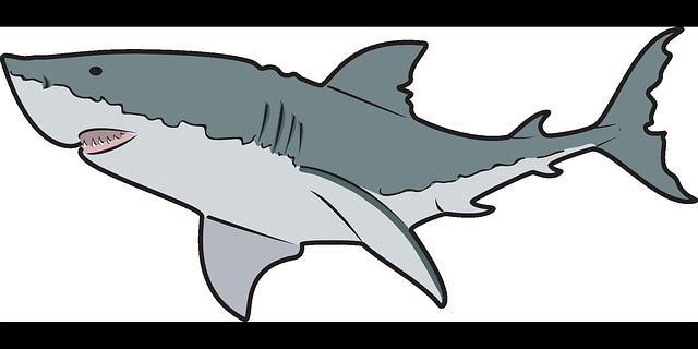 640x320 Whale Shark Clipart Tiger Shark