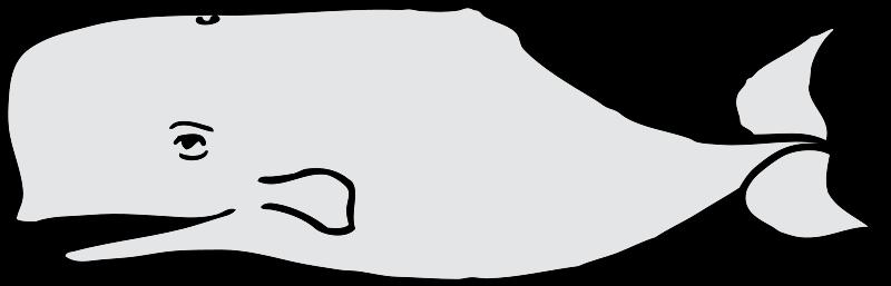 800x257 Whale Clip Art 2 Image