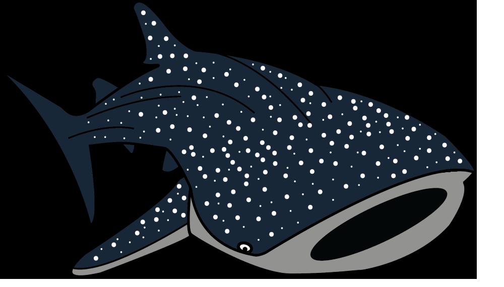 1000x570 Whale Shark Clipart, Explore Pictures