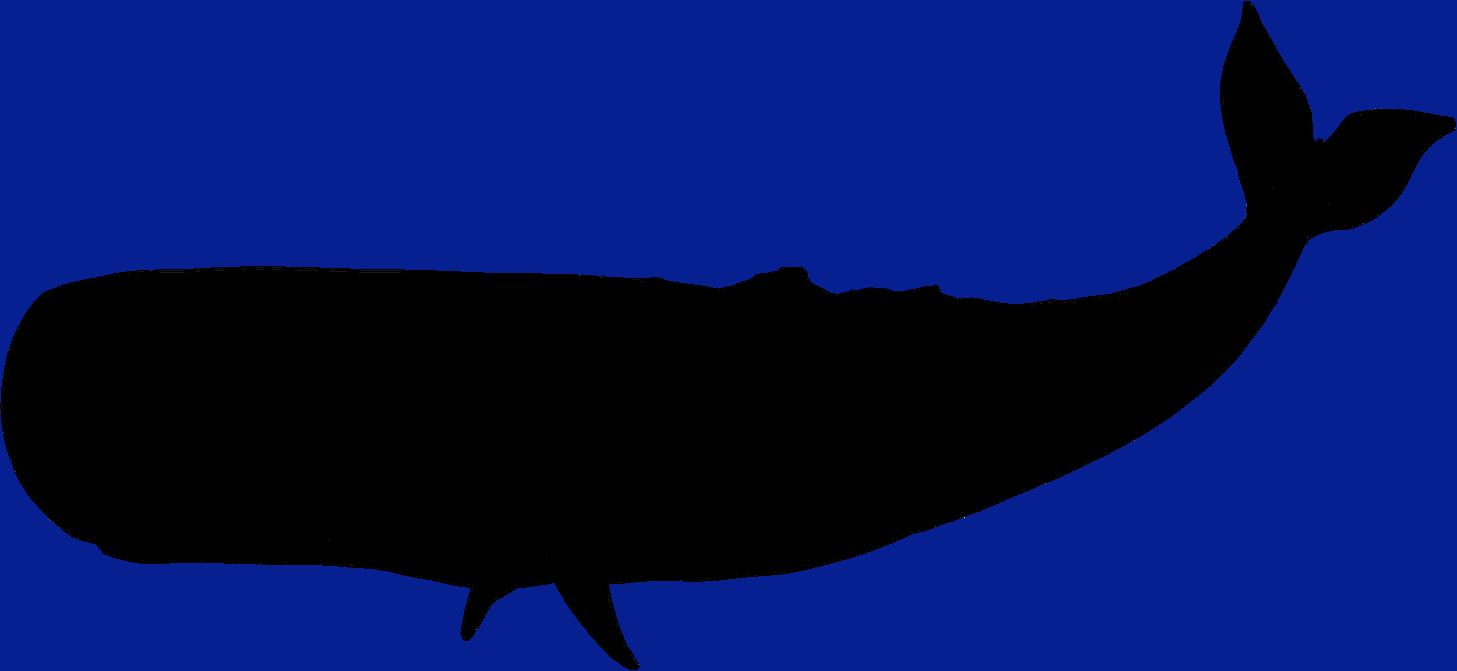 1457x671 Blue Whale Clipart Silhouette