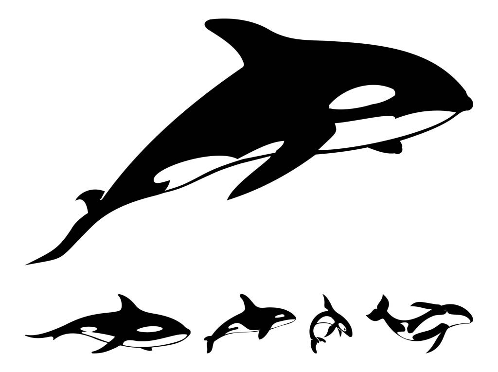 1024x765 Killer Whale Silhouettes Vector Art Amp Graphics