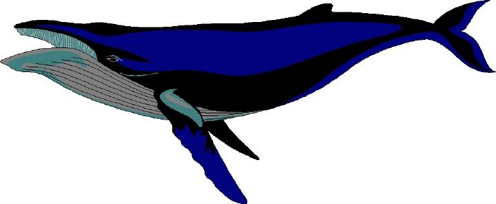 720x297 Top 75 Whale Clip Art