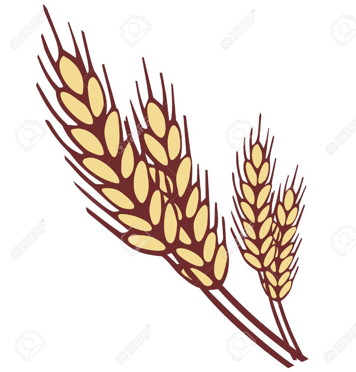 1244x1300 Grain Clipart Ear Wheat