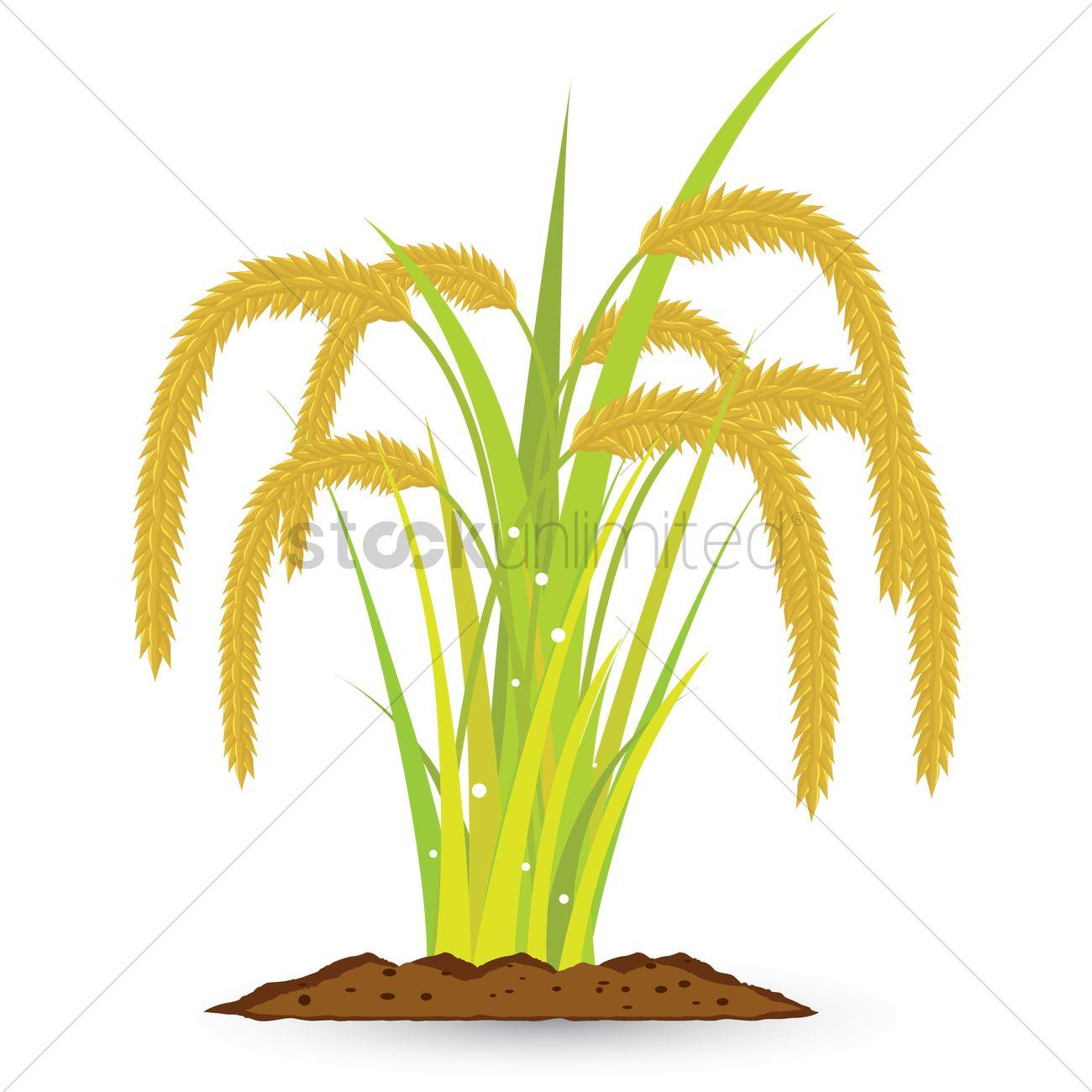 1300x1300 Grain Clipart Wheat Plant