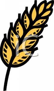 179x300 Grain Of Wheat Clip Art Image