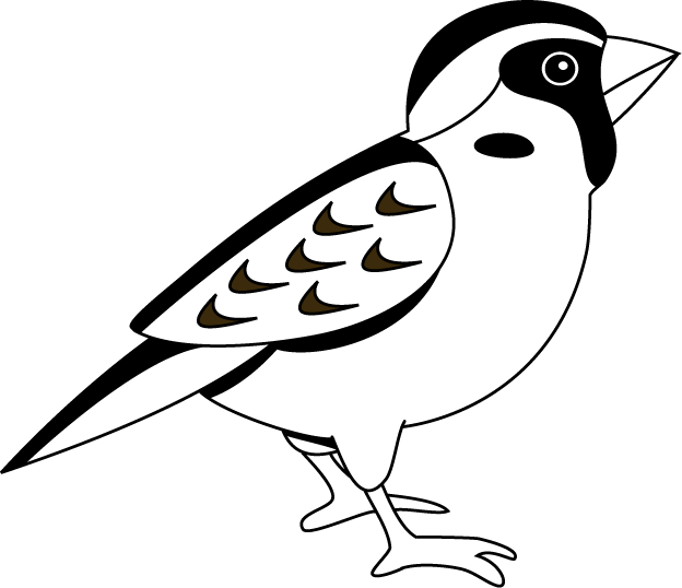 624x538 Black And White Sparrow Clipart