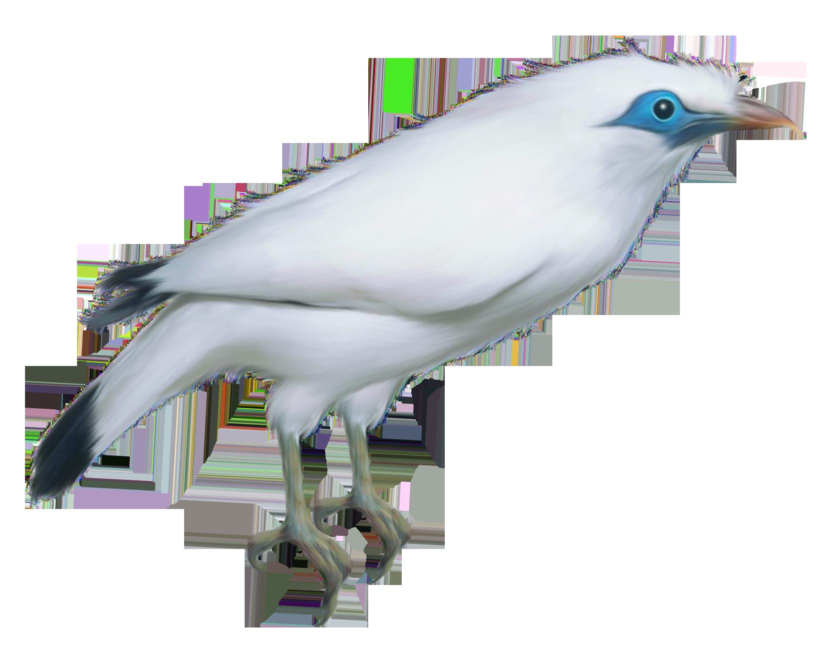 1643x1304 White Bird Transparent Png Clipart Pictureu200b Gallery Yopriceville