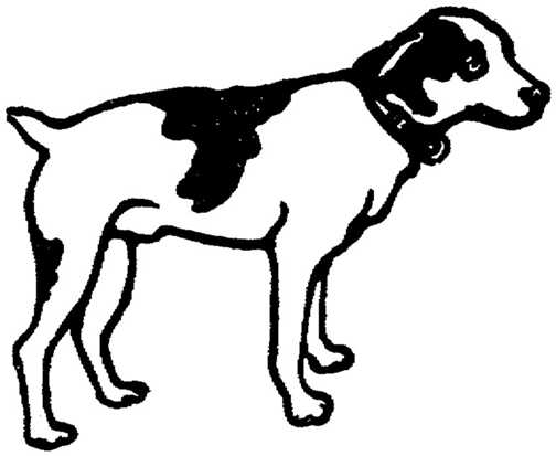 504x413 Graphics For Black And White Dog Graphics