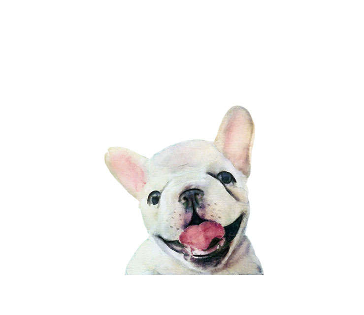 739x640 Watercolor French Bulldog Illustration