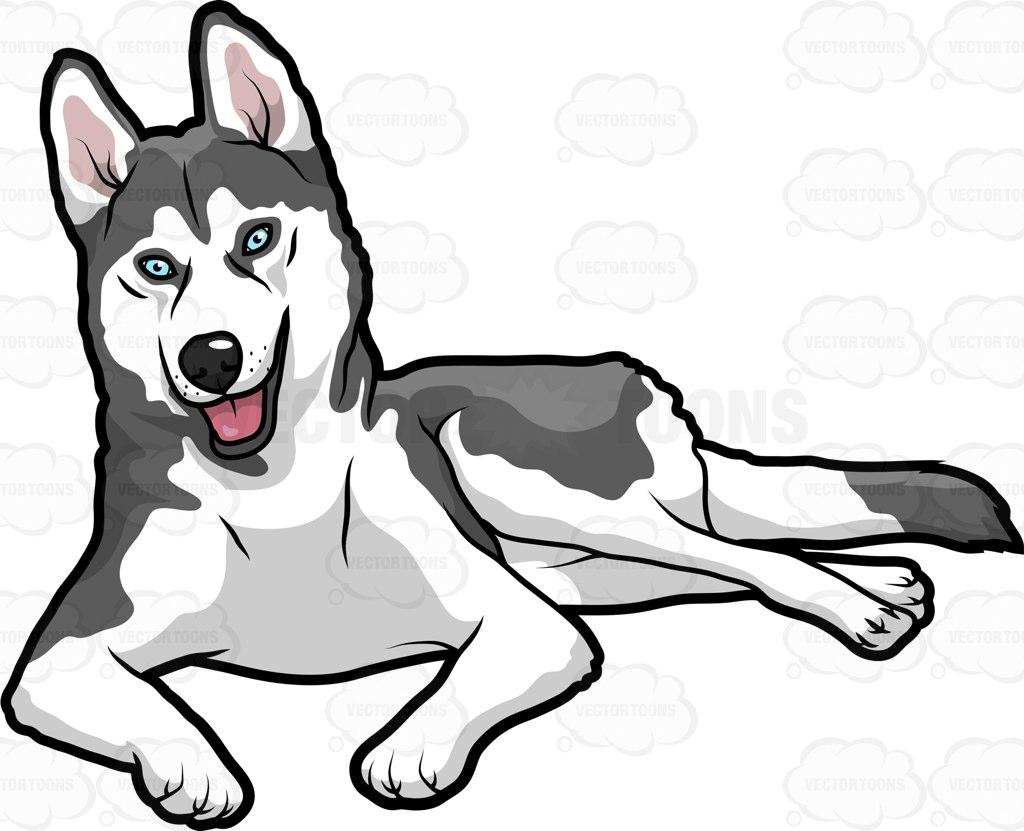 1024x831 Akita Clipart Husky Dog