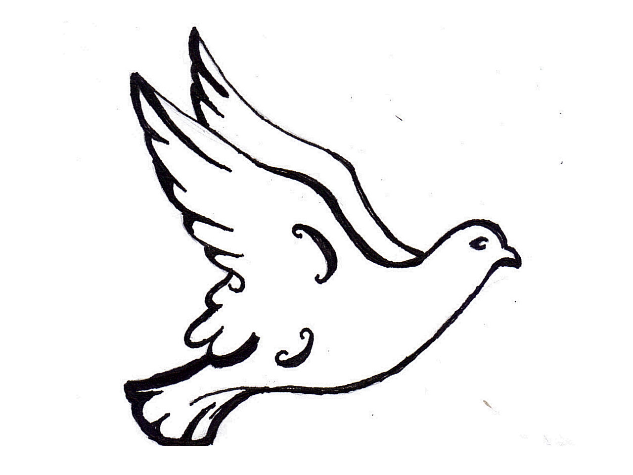 white dove drawing free download best white dove drawing on