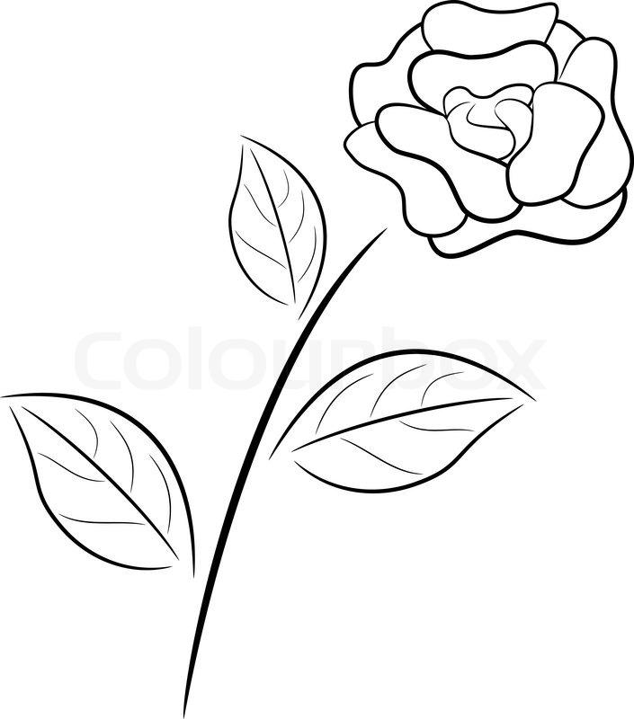 White Rose Border