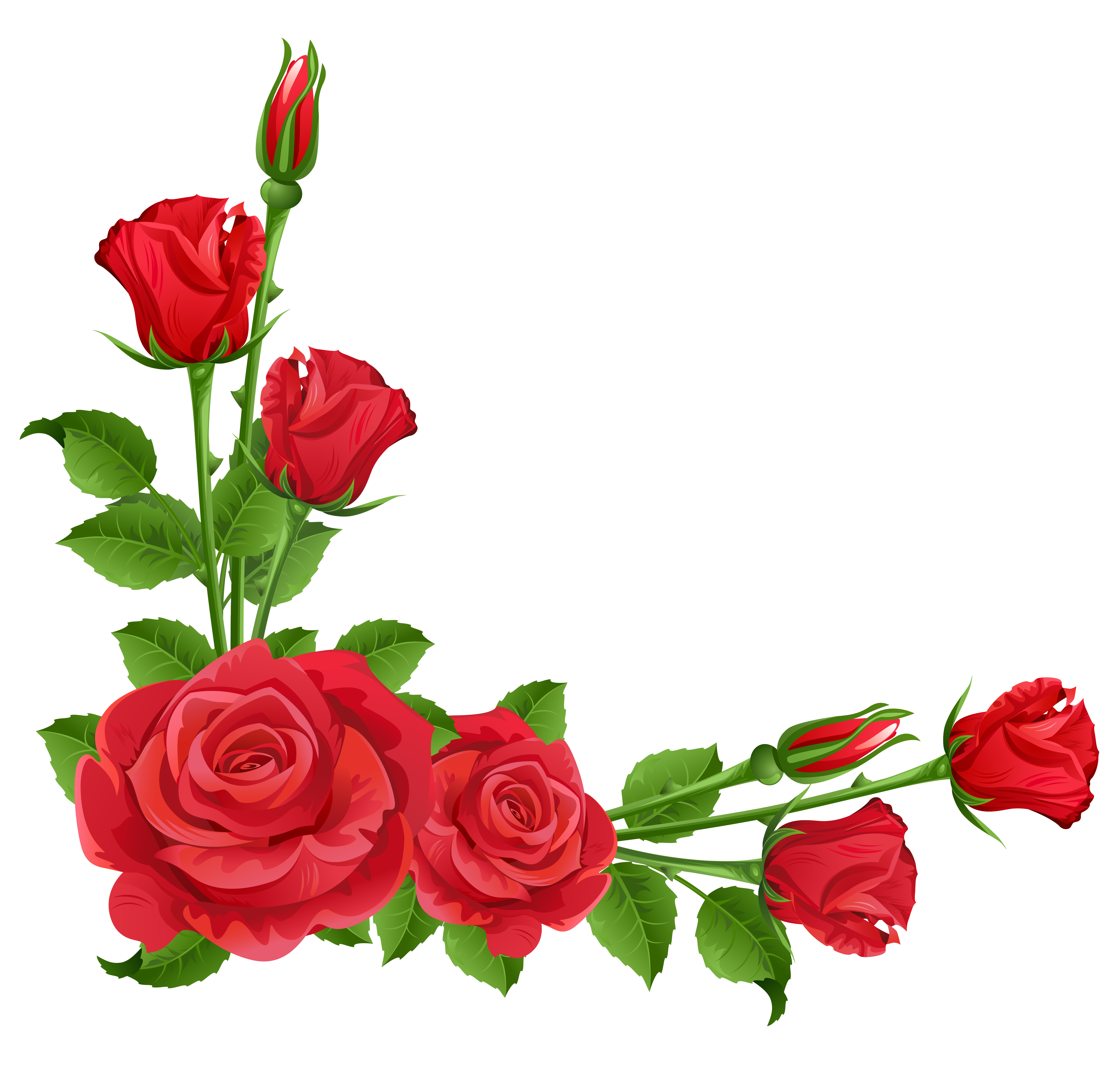 5187x4954 Top 82 Red Rose Clipart
