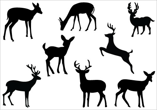 501x351 Whitetail Deer Jumping Clipart
