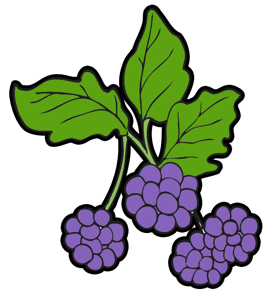 872x946 Blackberry Clipart Wild Berries