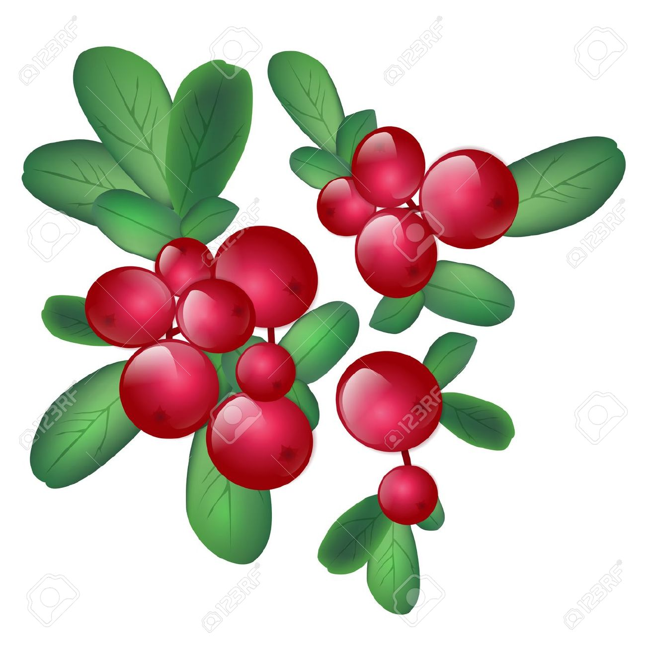 1300x1300 Wild Berries Clipart