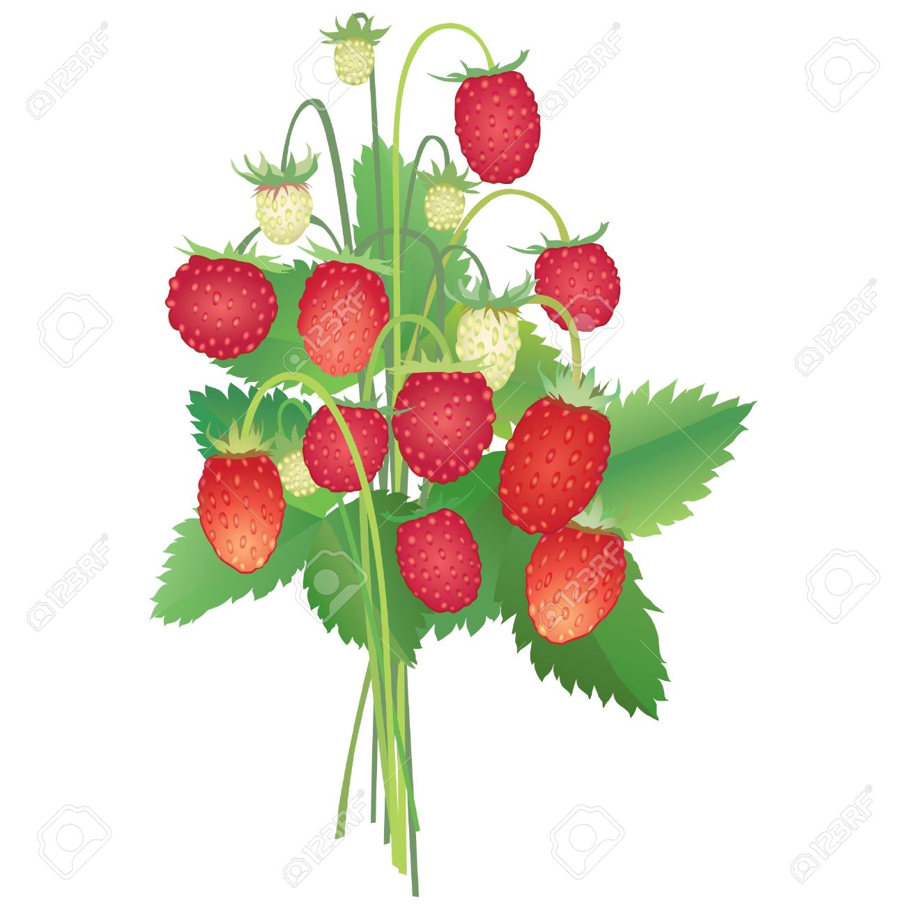 1300x1300 Wild Strawberry Clipart