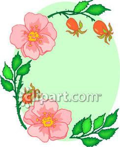 244x300 Rose Design