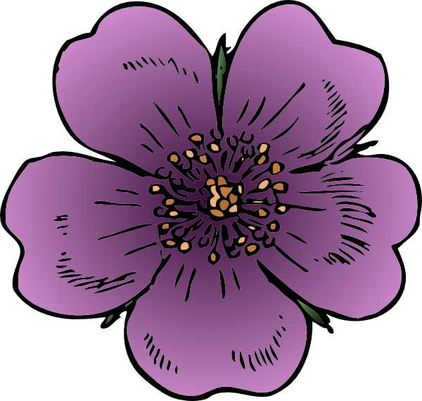 600x570 Wild Rose Png Clip Arts For Web
