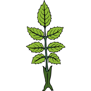 300x300 Wild Rose Branch Clipart, Cliparts Of Wild Rose Branch Free