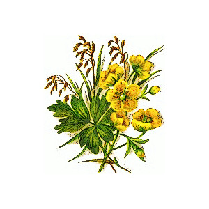 300x300 Clipart of wildflowers