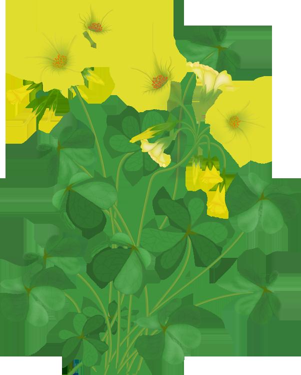 602x749 flowers