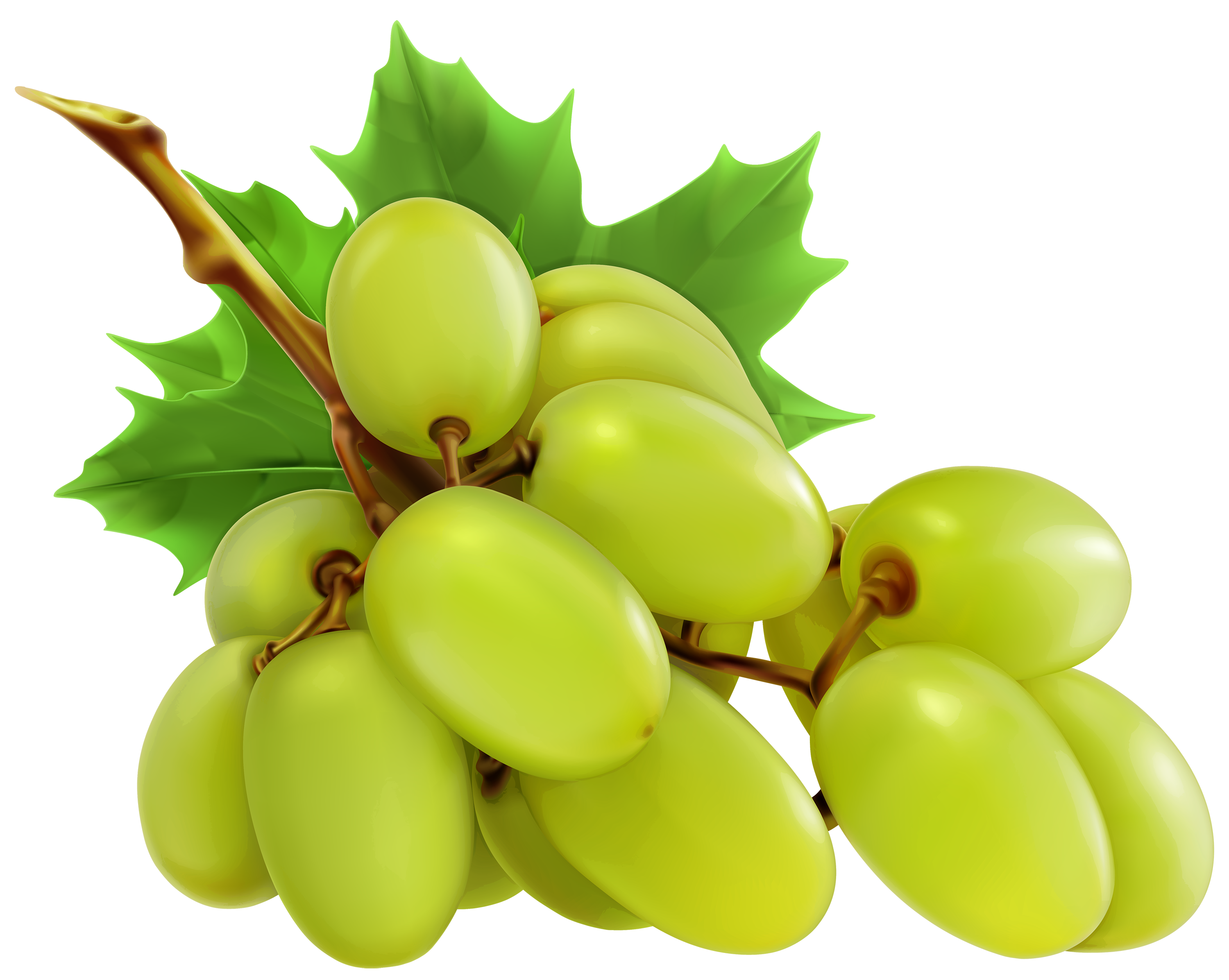 Wine Grapes Clipart | Free download best Wine Grapes Clipart on ...