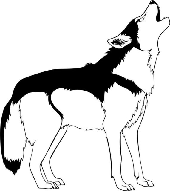 570x639 wolf clipart black and white