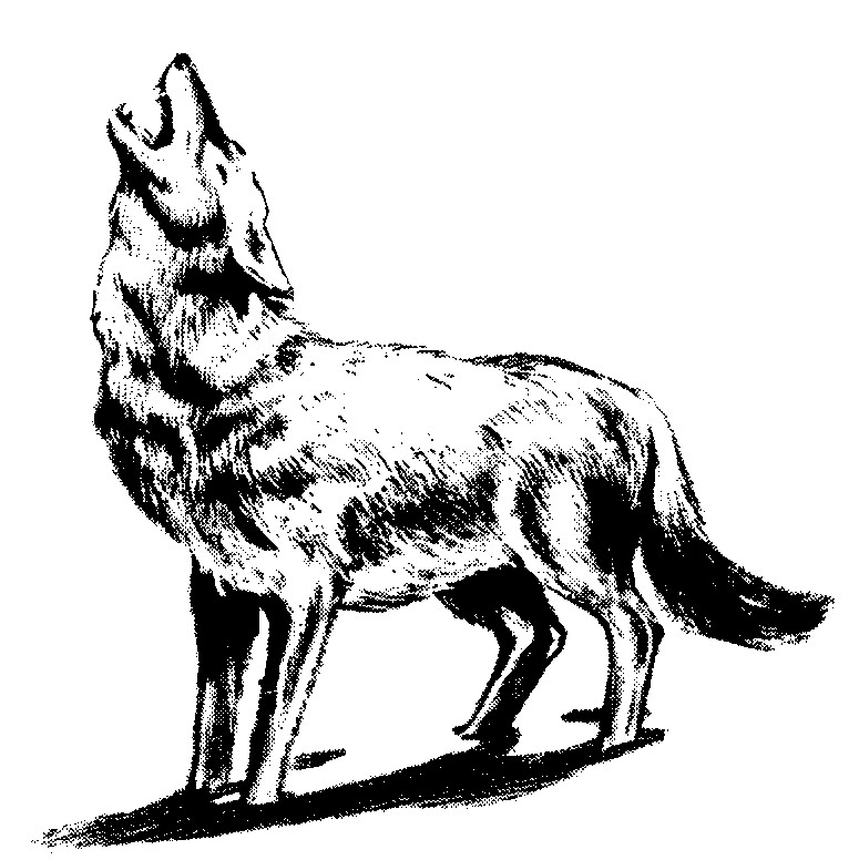 775x776 Wolf Cliparts